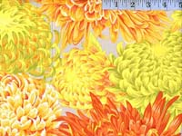 Yellow Japanese Chrysanthemum