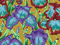 Bearded Iris Ochre